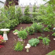 Roslindale Planting and Mulching